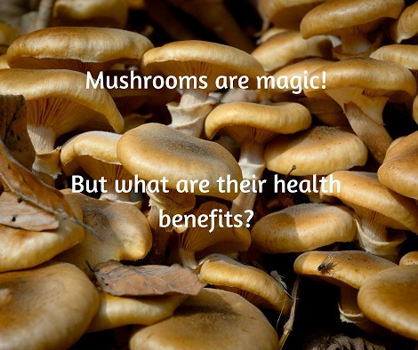 Magical Mushrooms
